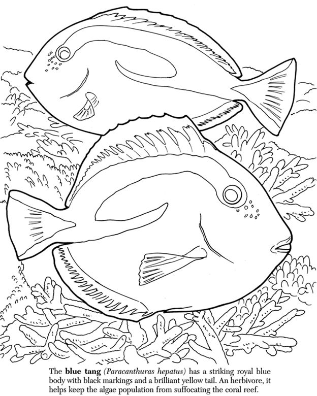 Welcome To Dover Publications Ocean Coloring Pages Fish Coloring Page Coloring Books