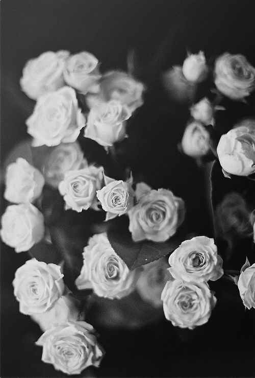 Pin By Talia On Phone Backgrounds Black And White Roses Black And White Wallpaper Iphone Flowers