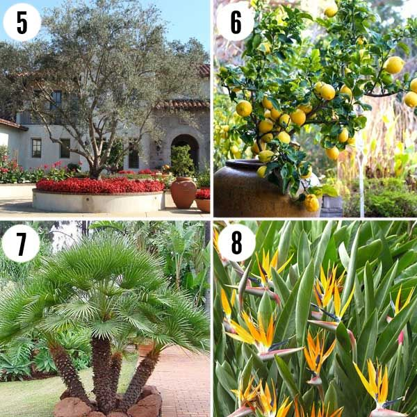 Drought Tolerant Plants For Spanish And Tuscan Landscapes