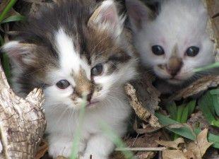 Punish Humane Officer For Murdering A Litter Of Kittens Kittens Animal Action Animals
