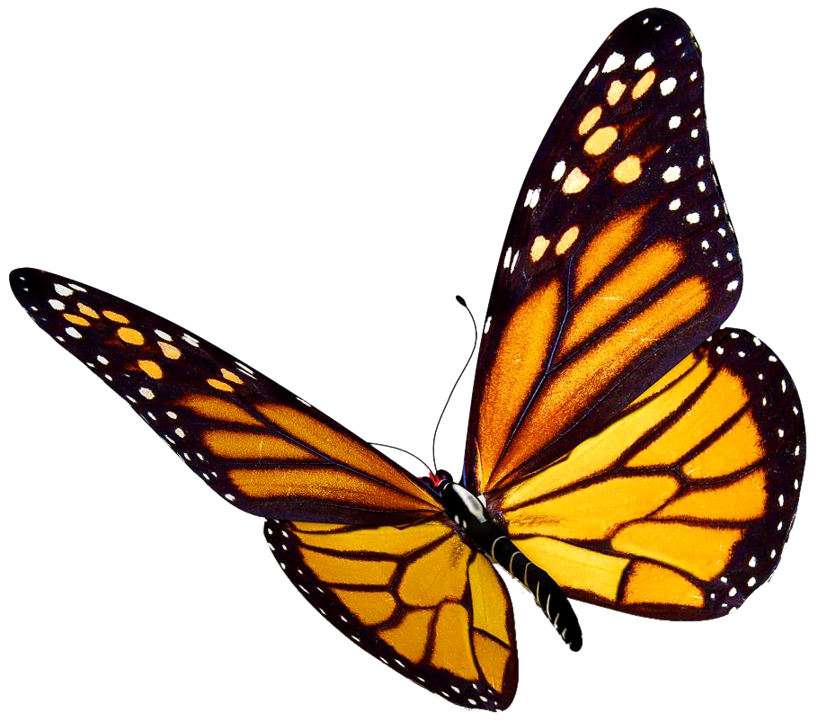 images of butterflies flying - photo #7