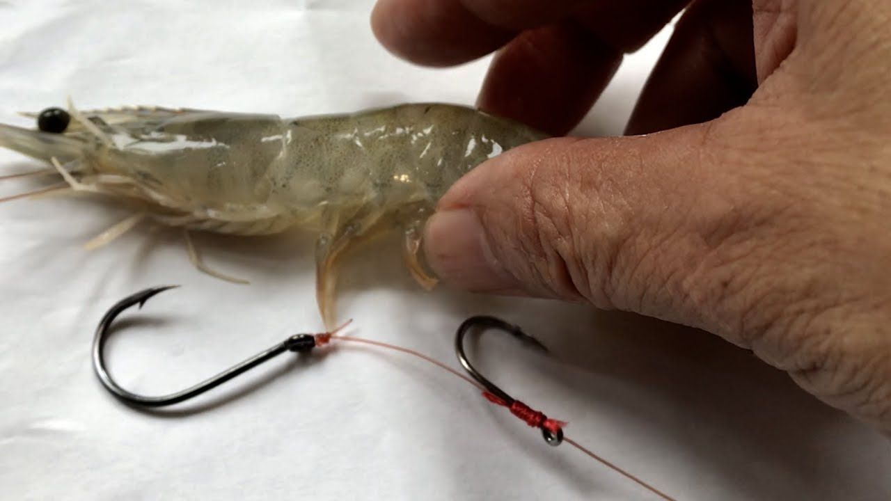 How To Rig Live Shrimp Adjust Hook For Fishing Thẻo Cau Trap Chẽm Vược Youtube Fish Fishing Tips Best Fishing Rods