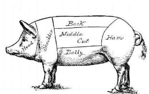 pig parts illustration