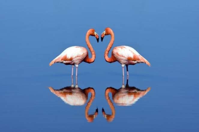 Flamingos - Galapagos Island, Ecuador. Steve Allen/Getty Images