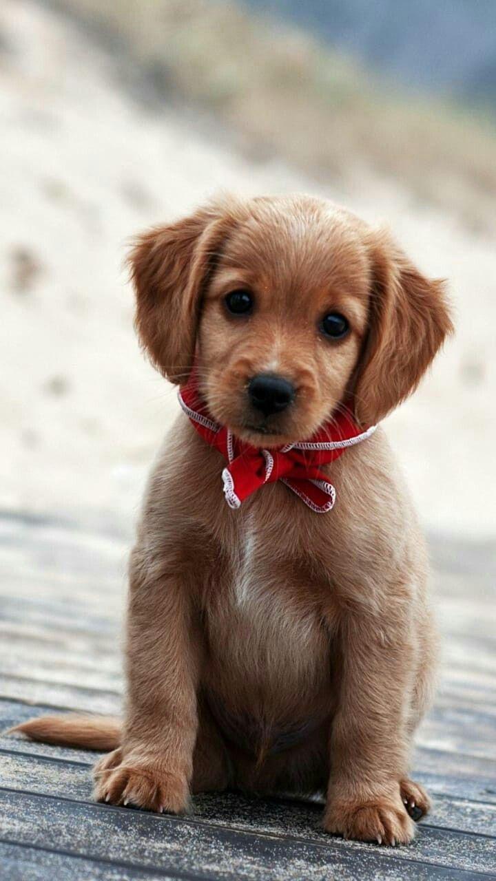 Sooooo cute I fell in love whit it easeli cute Puppy