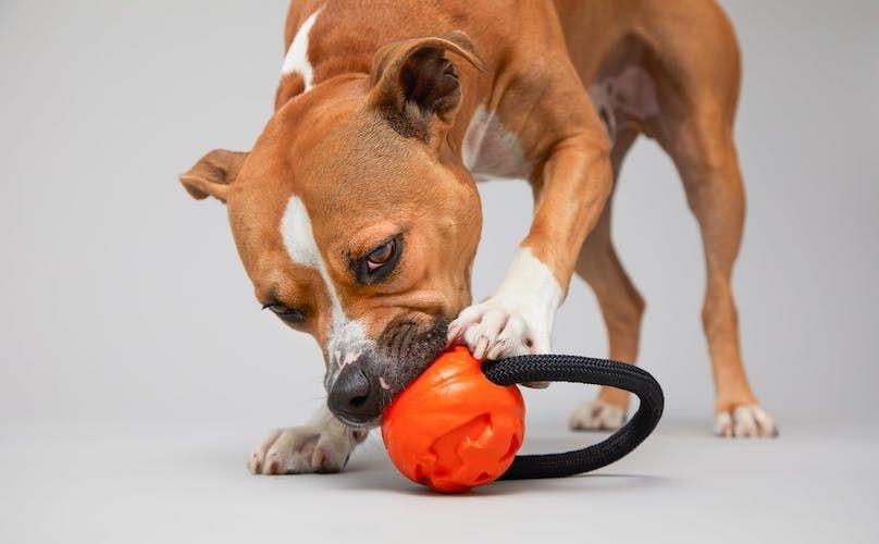 How Do I Add Fiber To My Dog S Diet Dog Diet Diet Dogs