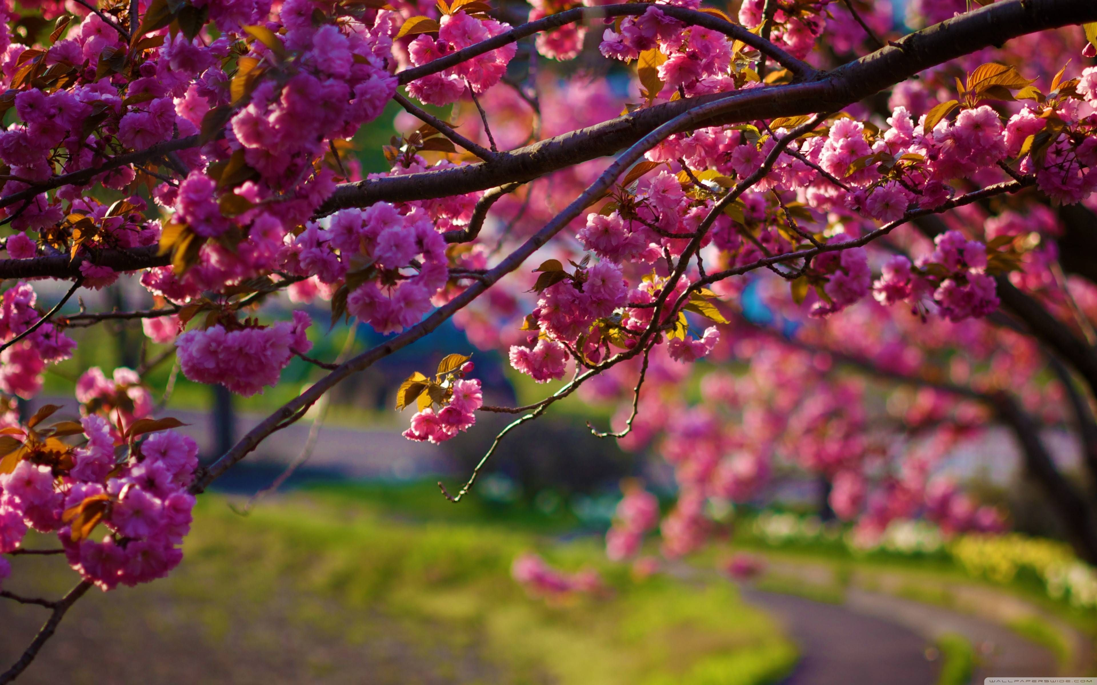 Spring Wallpapers For Iphone | Natures Wallpapers in 2019 | Spring wallpaper, Autumn leaves ...