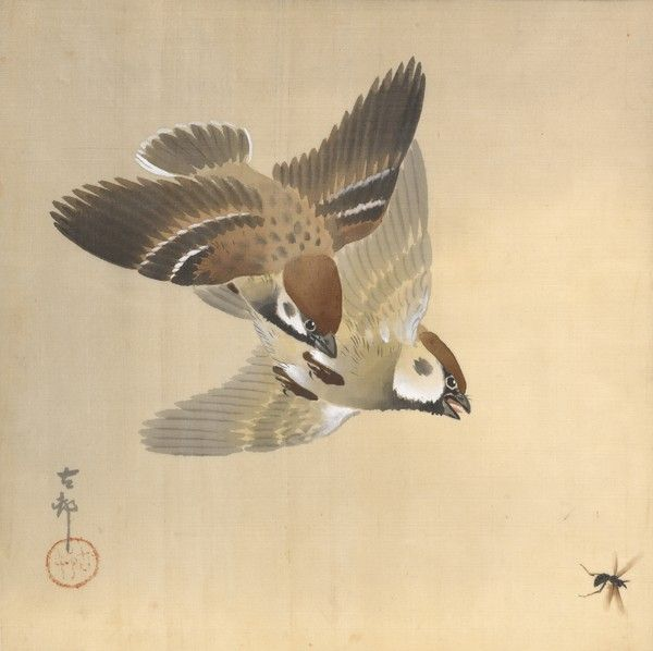 Sparrows Chasing Flying Insects