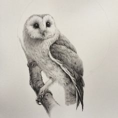 absolutely stunning barn owl drawing from artist Vanessa Foley { @vanessafoley }. #vanessafoley