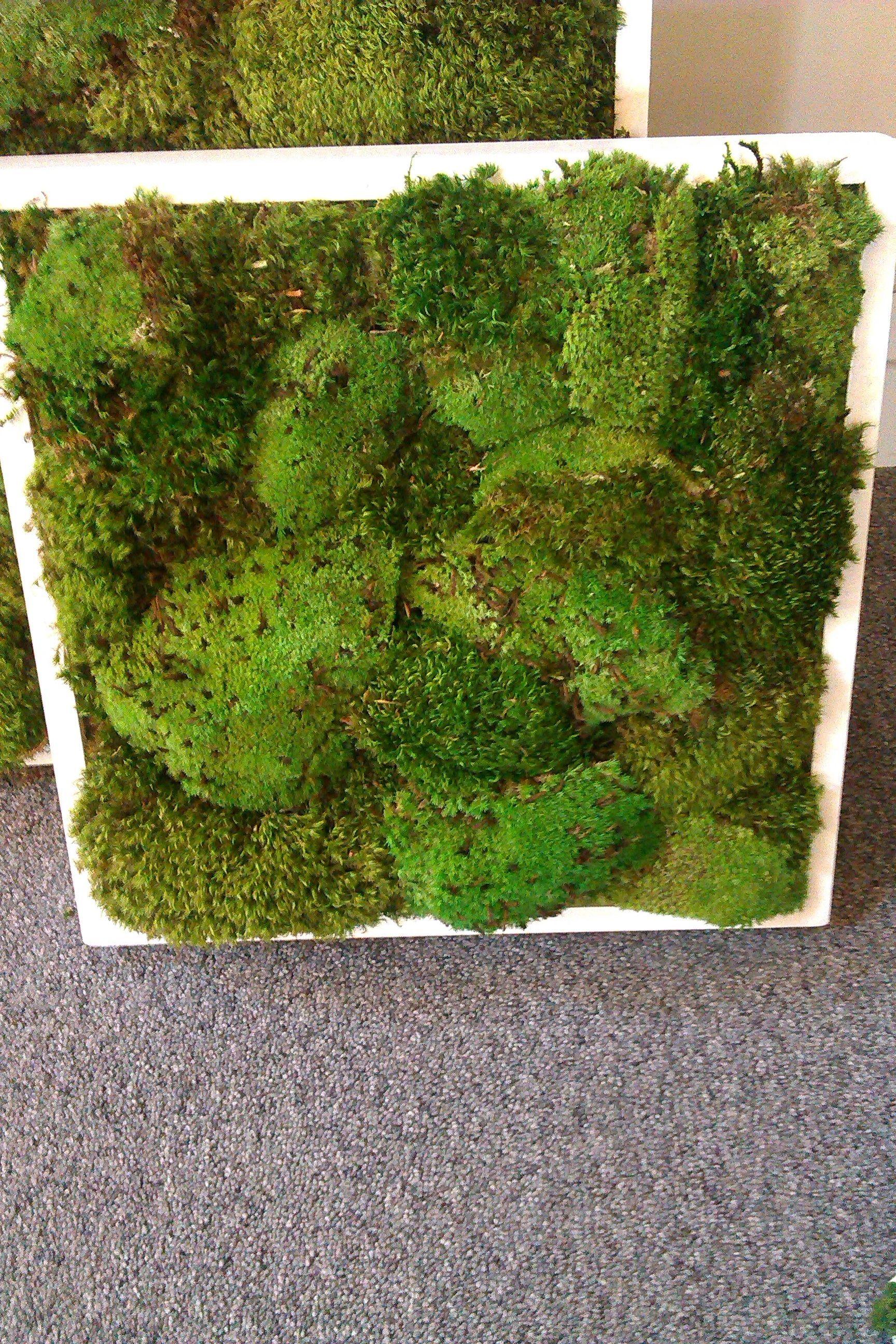 Sample mood moss panel | Preserved Moss Walls & Wall Art ...
