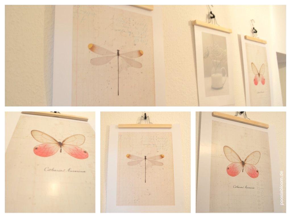 Hosenbugel Bilder
