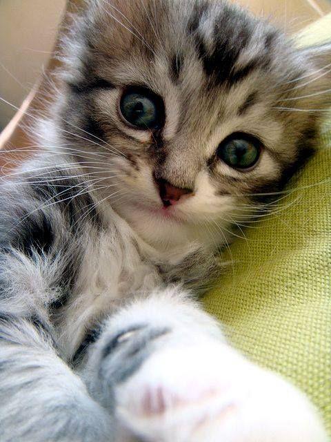 Sweet Baby Cats Kittens Beautiful Cats