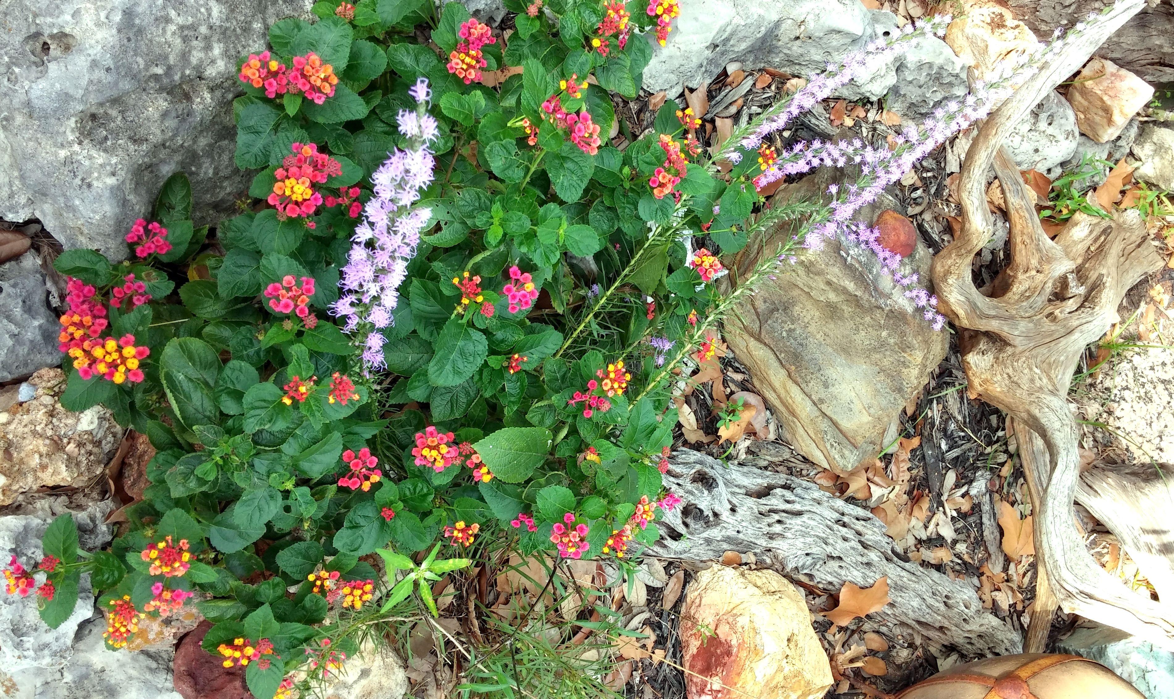 Fall Flowers in Bloom