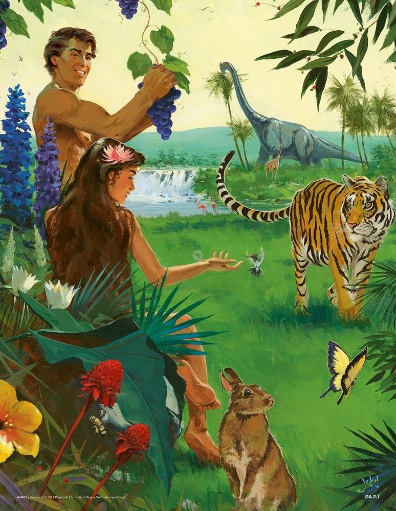 Creation Adam And Cain A Beka Flash A Cards Adam And Eve