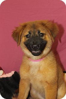 Pin By Diane Litter On Adopt Rottweiler Mix Rottweiler Pets