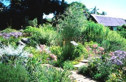 Great Water Wise Garden