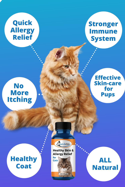 Cat Skin Allergy Relief in 2020 Cat skin, Dermatitis