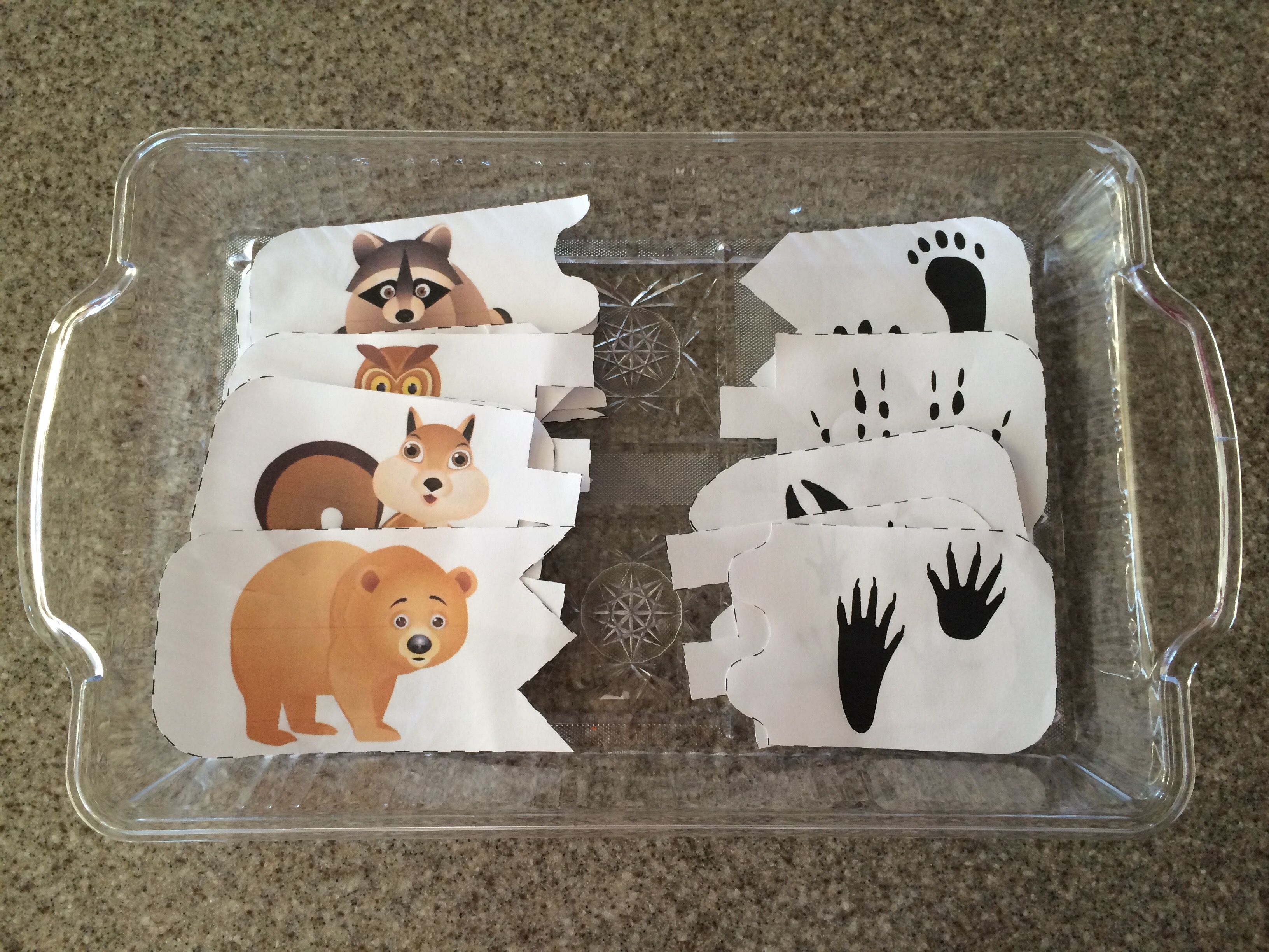 Provocation For Forest Animal Tracks Matching