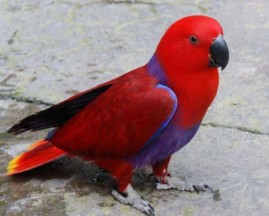 https://www.facebook.com/BirdsPh0tography/photos/a.1668596460094155.1073741828.1668595346760933/1782697458684054/?type=3