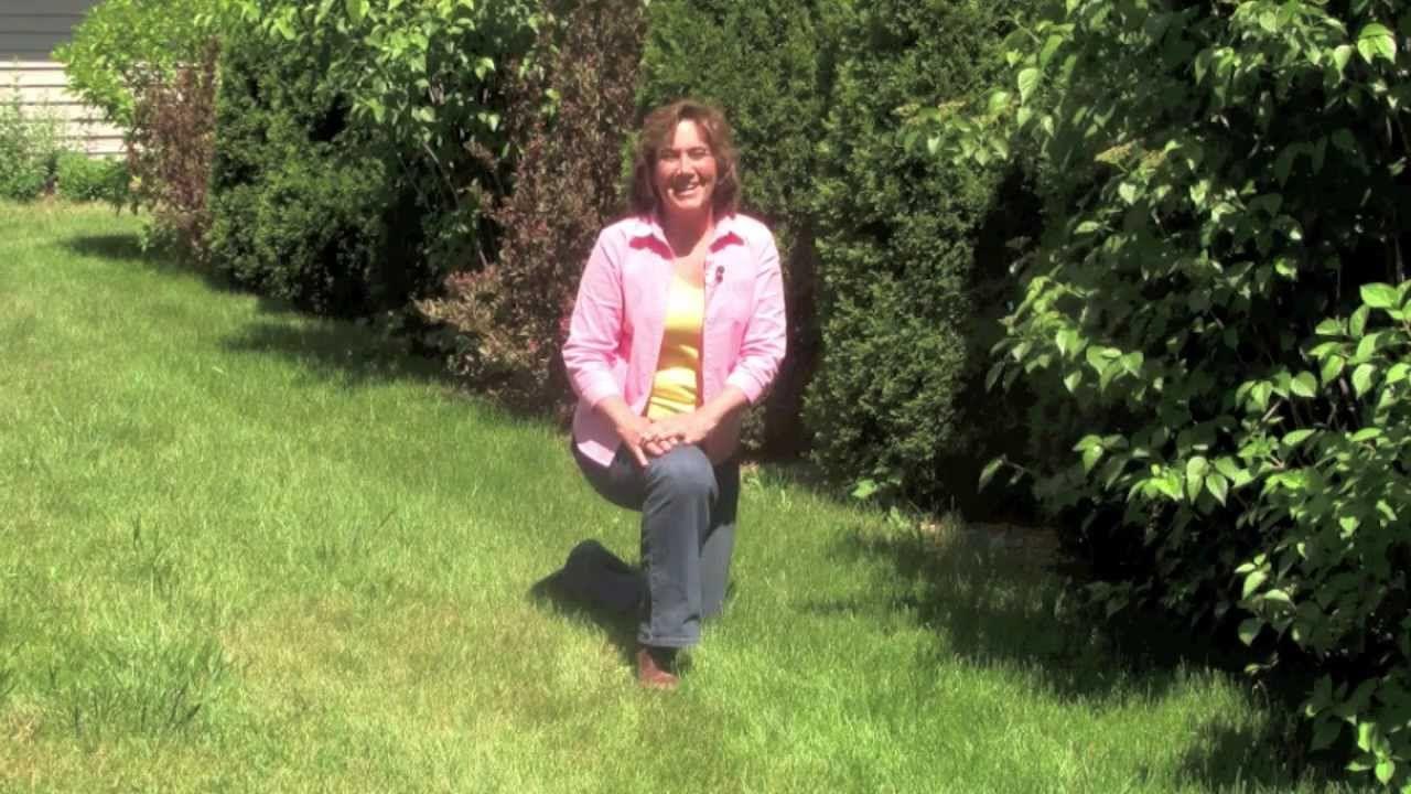 A Fabulous Lawn in 5 Easy Steps Healthy lawn, Easy step