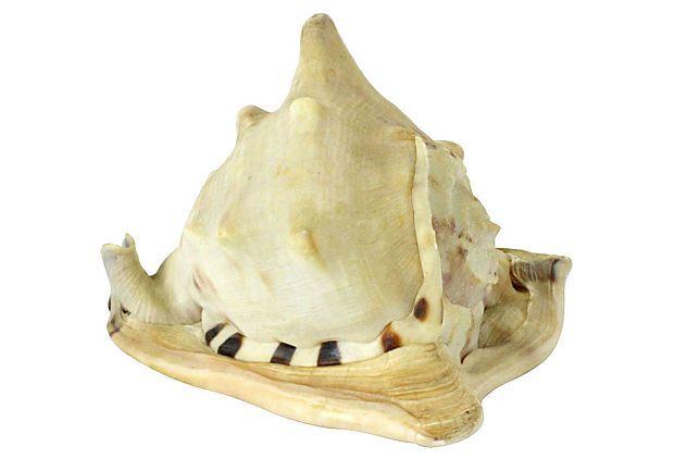 "Sea Snail Shell 5.5""L x 5.5""W x 4.5""H ($200.00)  $99.00 OneKingsLane.com"