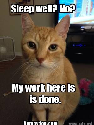 My Work Here Is Done Funny Cats Funny Animals Funny Meme Pictures