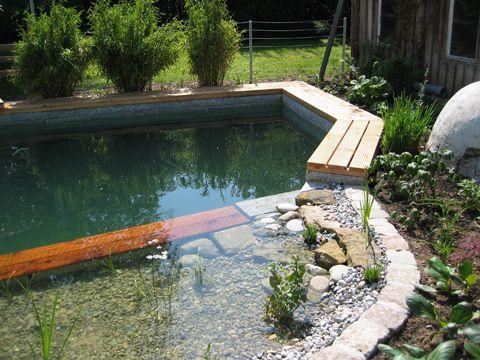 Schwimmteich pool pinterest schwimmteich teiche und - Kunstfelsen pool ...