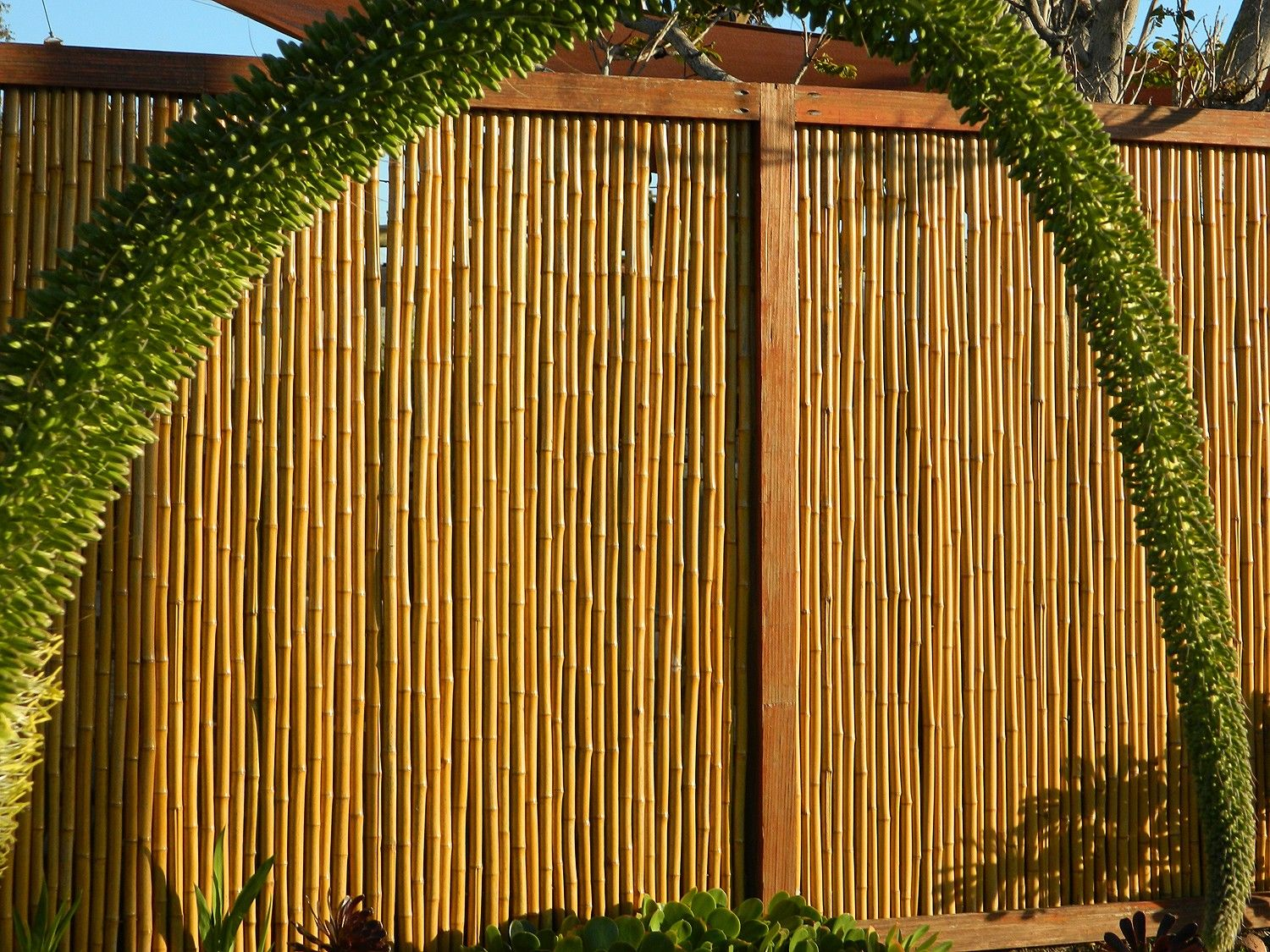 Natural Rolled Bamboo Fence 1 D X 4 H X 8 L Fence Design Bamboo Fence Backyard Fences