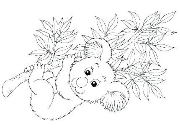 Kawaii Koala Coloring Pages Coloring Pages For Kids Owl