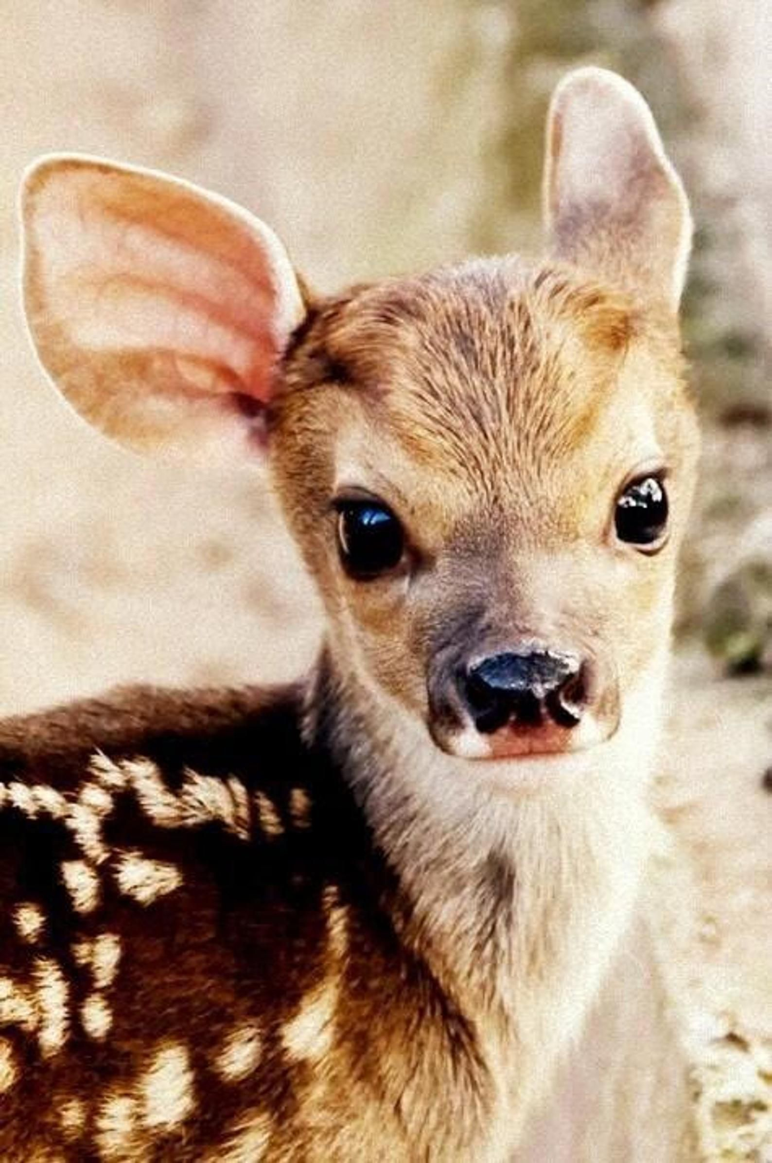 Baby Deer Photograph 8x10 Fabric Block Great for