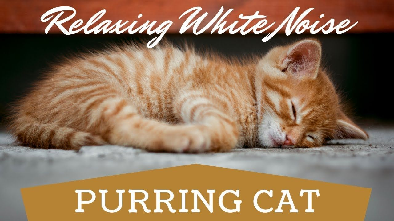 Cat Purring ASMR Cat Purr White Noise To Soothe a Baby