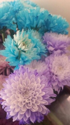 Varying coloured flowers