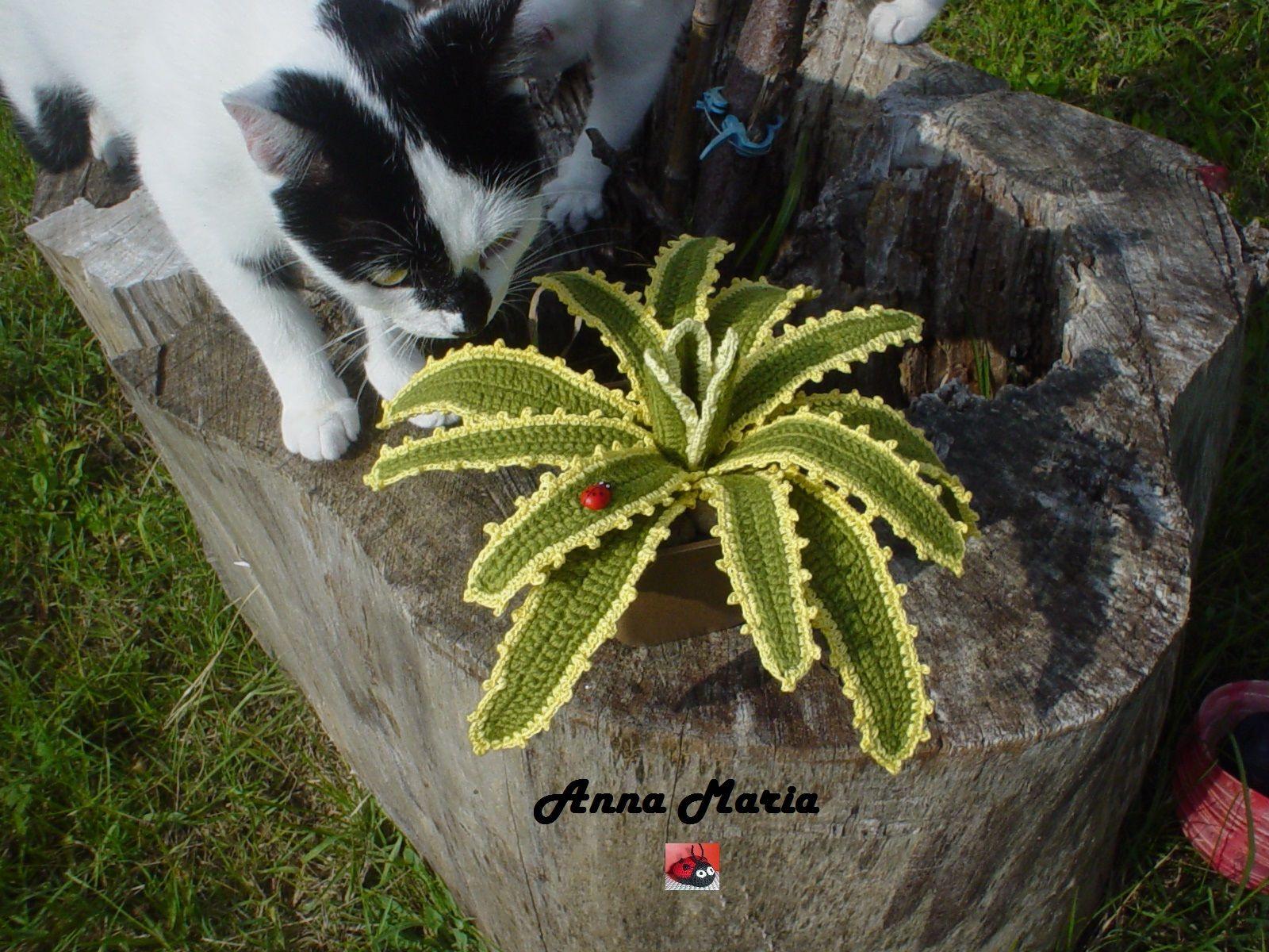 Piante grasse agave uncinetto amigurumi plants for Piante grasse uncinetto