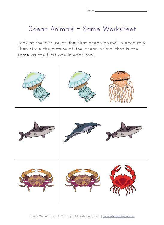 Same Ocean Animal Printable Worksheets Ocean Worksheets