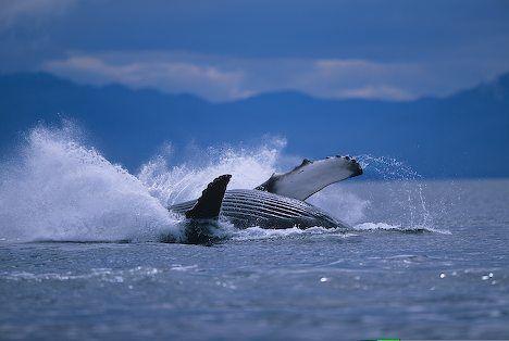 Pacific Ocean Crashing Into The Calm Waters Of The Pacific Ocean In Alaska Usa Ocean Mammal Alaska Pacific Ocean