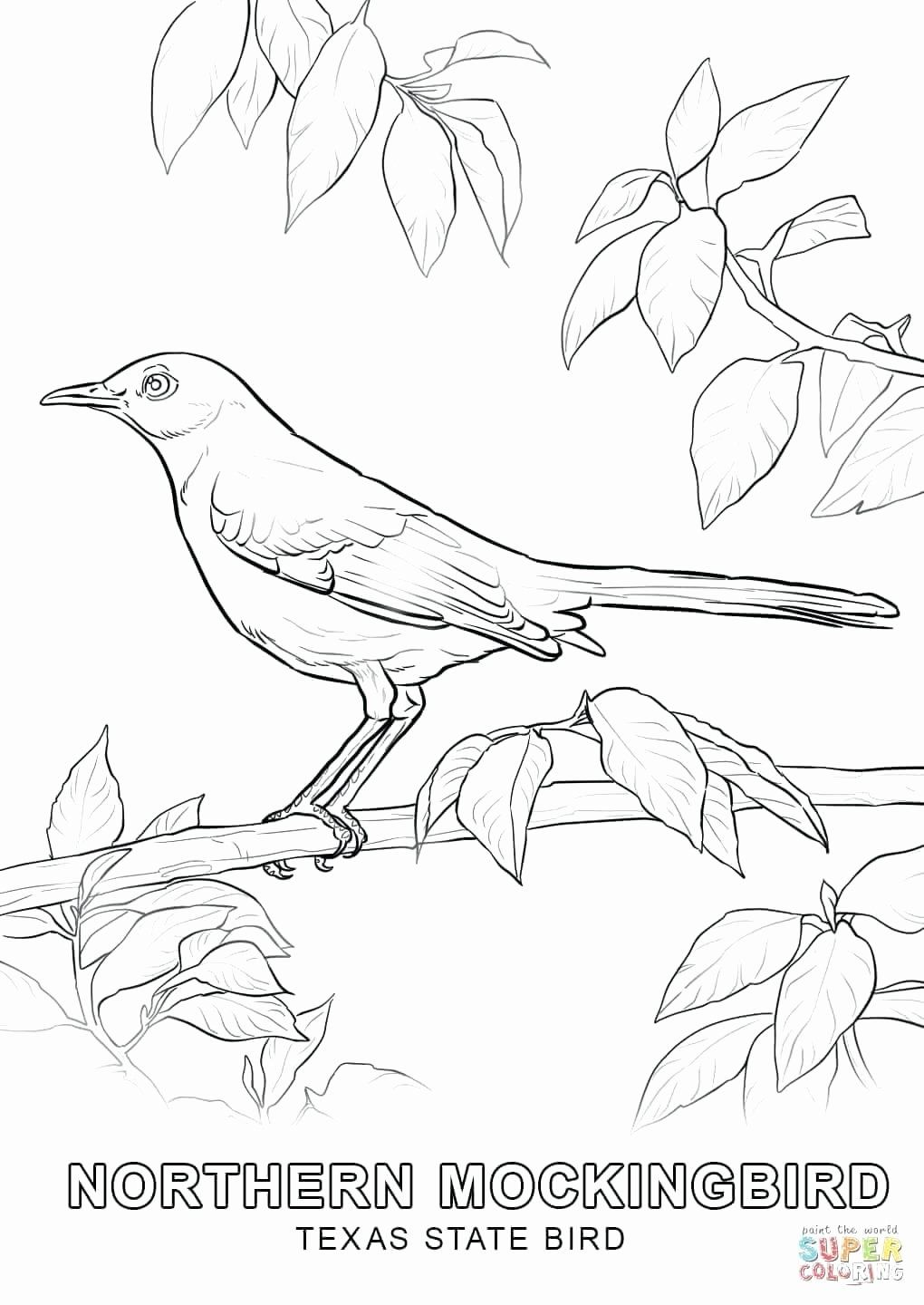 Pennsylvania State Bird Coloring Page New Pennsylvania State Tree