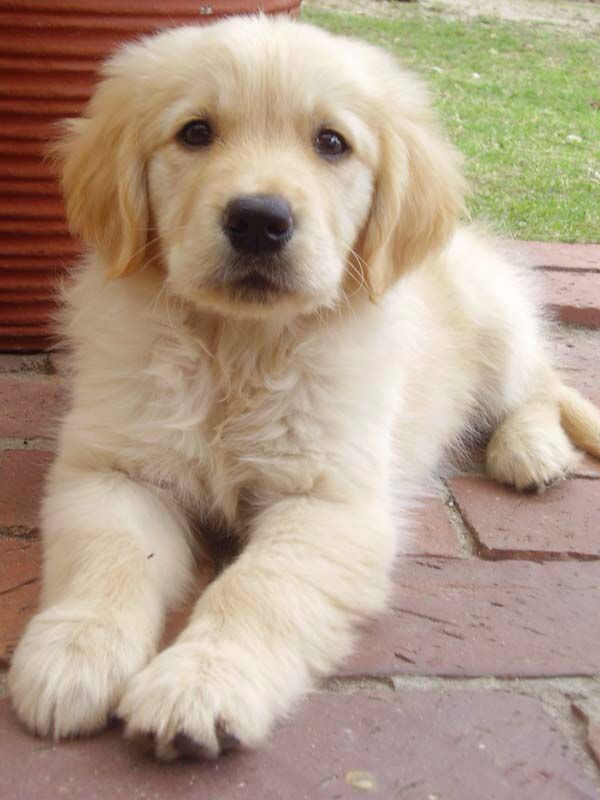 I want to get a dog.