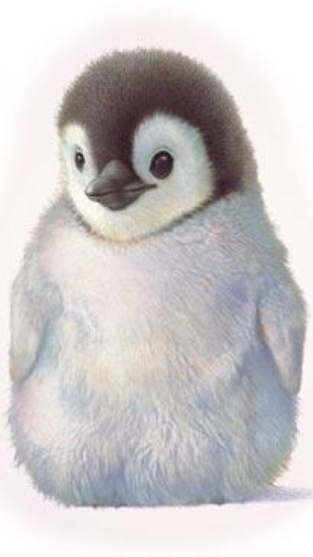 Cute Cartoon Penguins Wallpaper Penguin Chick Penguins Penguins Cute Animals Penguin