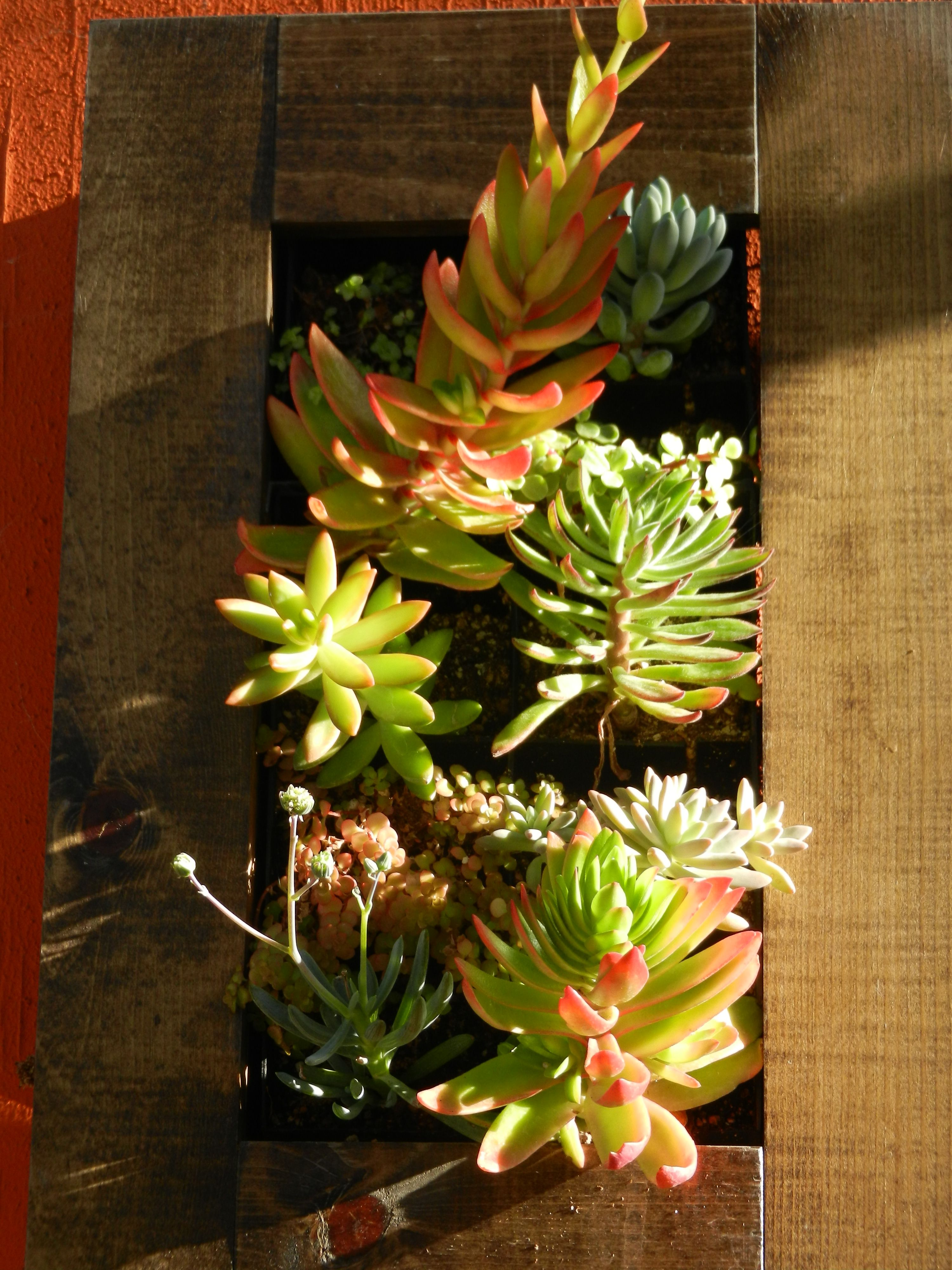 Gorgeous succulents from \