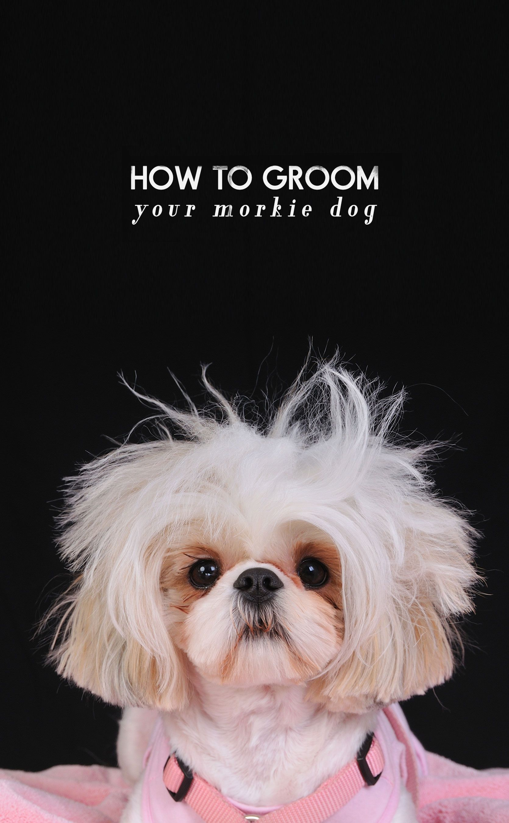 How To Groom A Morkie The Full Step By Step Guide Macie