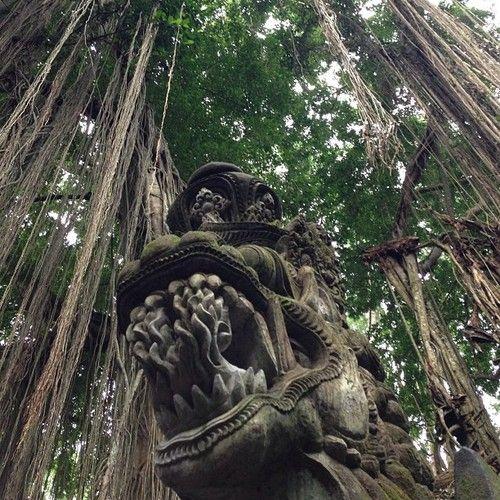 Monkey Forest, #ubud, #bali