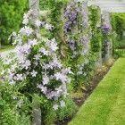 Dream Landscapes: 10 Perennial Gardens Inspired by Piet Oudolf #kletterpflanzenwinterhart Dream Landscapes: 10 Perennial Gardens Inspired by Piet Oudolf: Gardenista #kletterpflanzenwinterhart