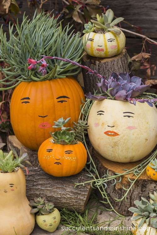 Such a cute idea to use succulents as hair for pumpkin faces!