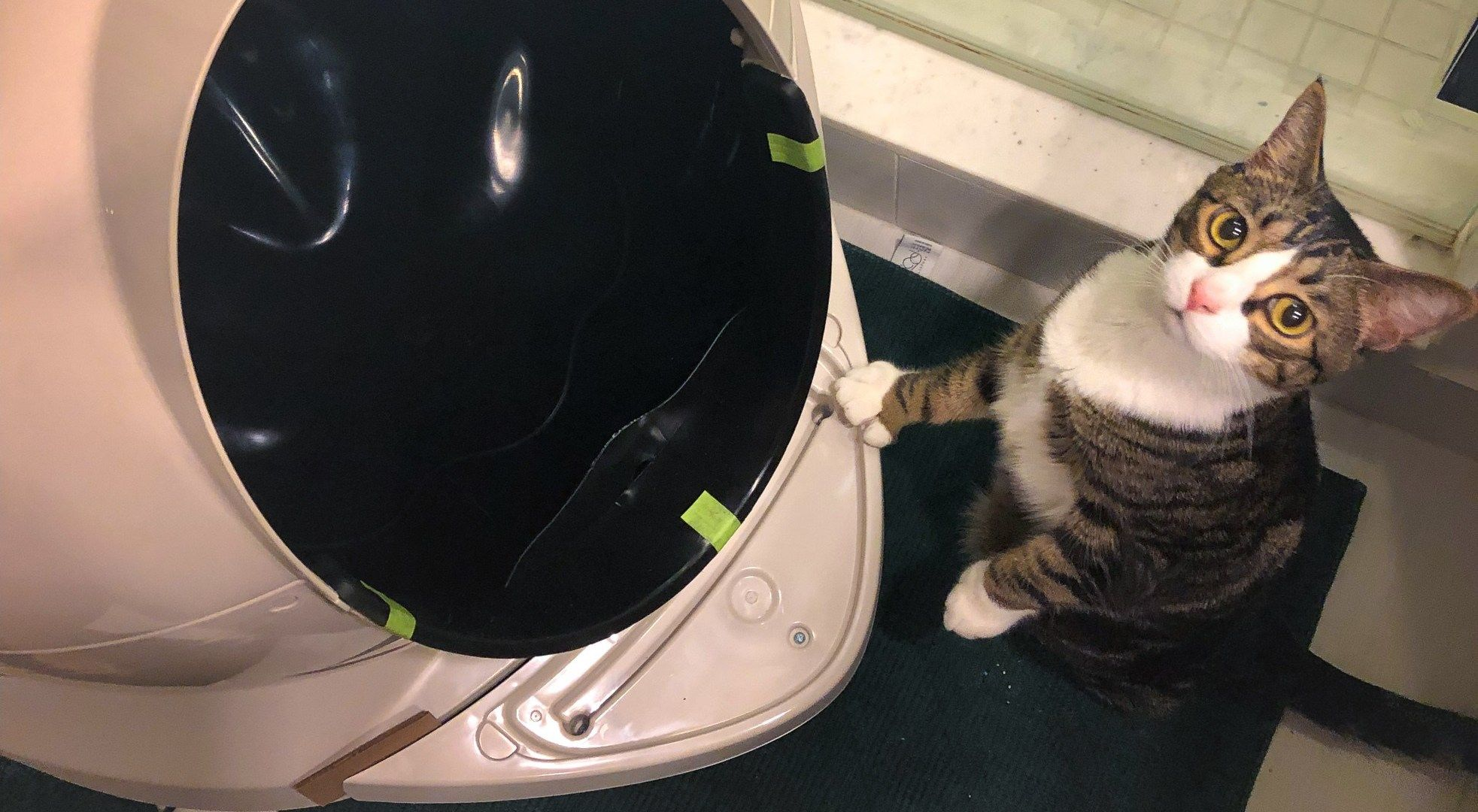 Litter Robot Spaceship Litter Box Or Both With Images