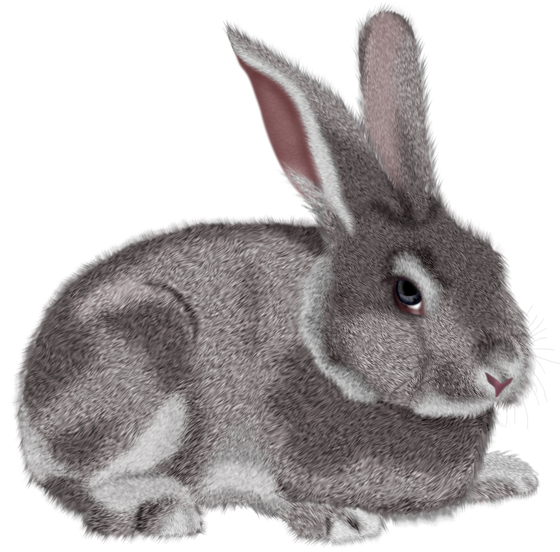 Bunny realistic. Grey rabbit clipart picture