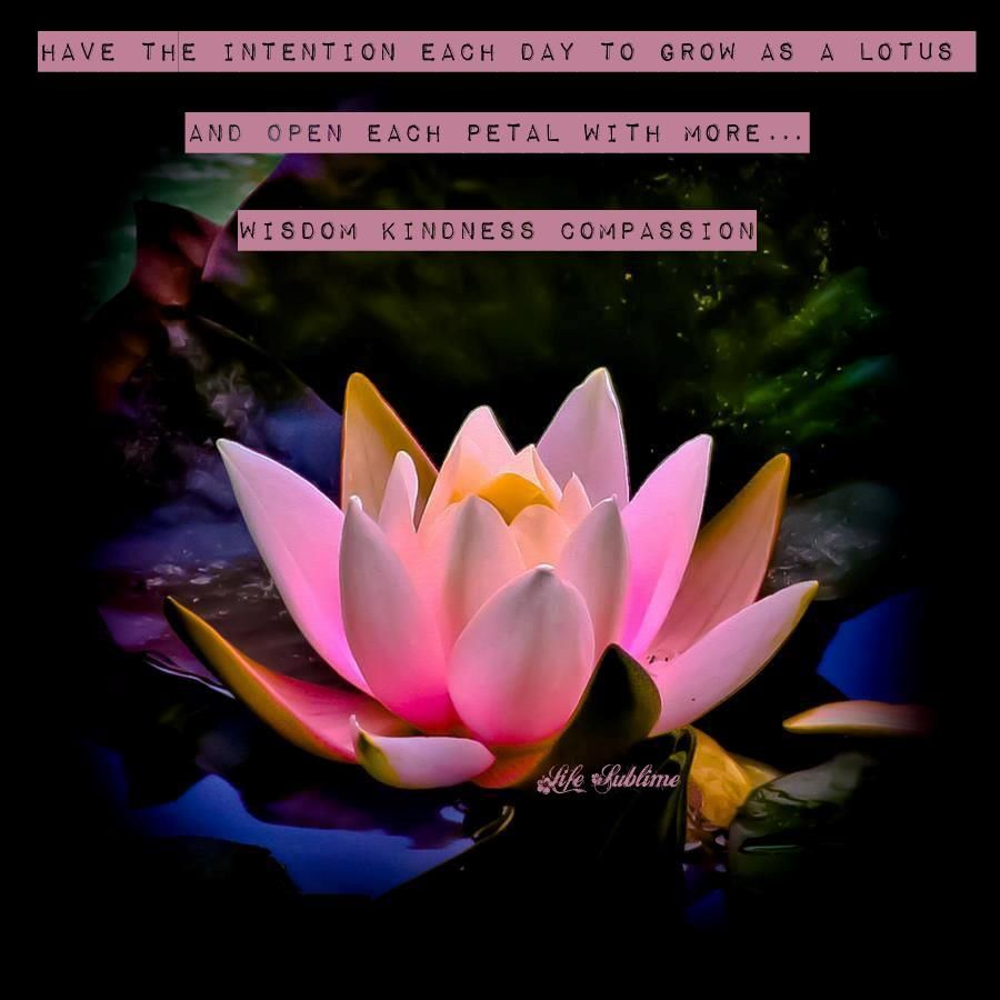 Grow like a lotus flower lotus flowers pinterest lotus flower grow like a lotus flower izmirmasajfo