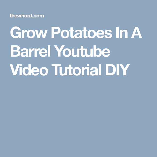 Grow Potatoes In A Barrel Youtube Video - The WHOot ...