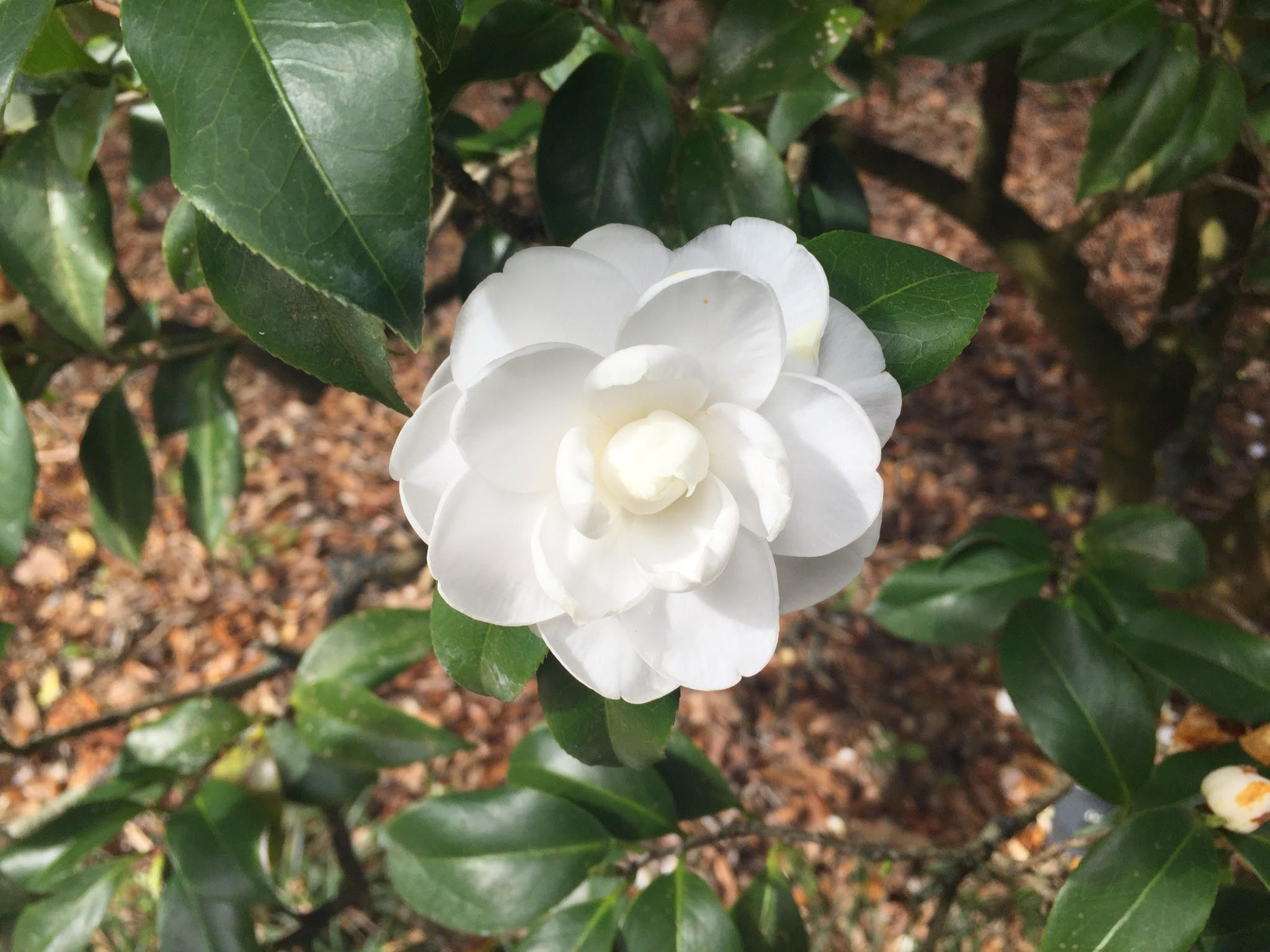 Zone 7 Year Round Plants Year Round Plants For Landscaping In
