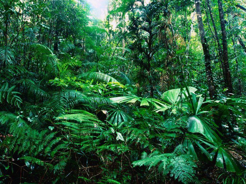 Amazon Rainforest South America World for Travel Doğa