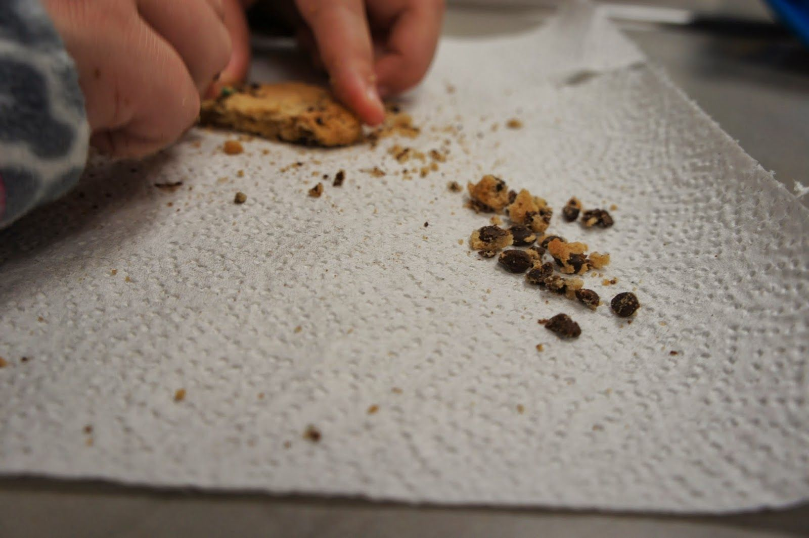 Dig Chocolate Chips Out Of Cookies For A Hands On Science Lesson On Weathering And Erosion